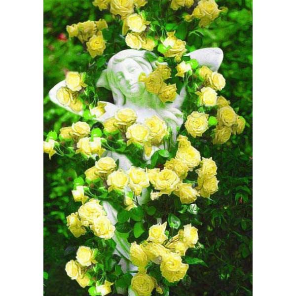 Роза плетистая Солнце свет